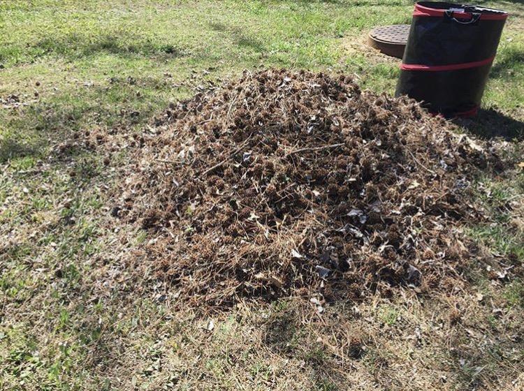 Lawn Care Poplar Bluff, MO | GrassMaster Lawn Service