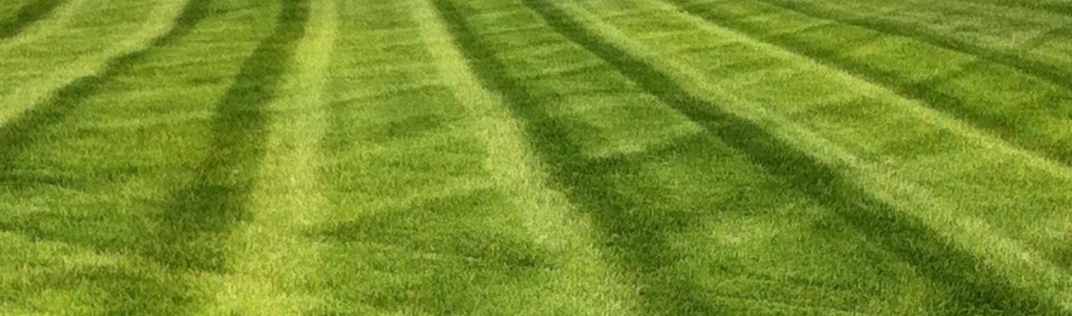 Lawn Service Poplar Bluff, MO